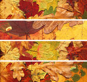 Autumn leaves banners Stock Image