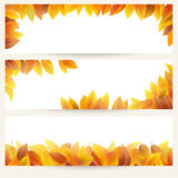 Autumn leaves banners Stock Photography