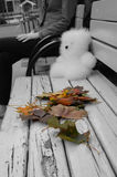 Autumn leaves and a bear toy on a bench. Coloreful autumn leaves are laying on a black and white bench next to a furry white bear toy, further are visible young Royalty Free Stock Image