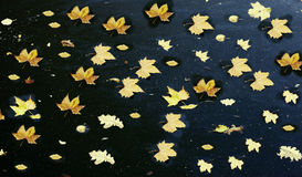 Autumn leaves. Beautiful background of autumn leaves. beautiful image Stock Photo