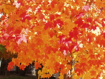 Autumn Leaves. Beautiful Fall colors for background stock images