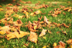 Autumn leaves in beautiful fall park.  Autumn Landscape Stock Image