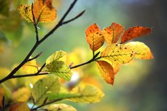 Autumn leaves. Beautiful autumn nature with colorful leaves royalty free stock photos