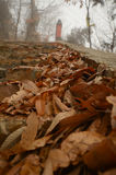 The autumn leaves Royalty Free Stock Photography