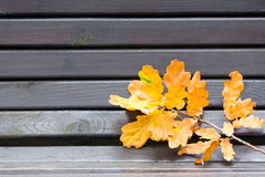 Autumn leaves and bench Stock Photography