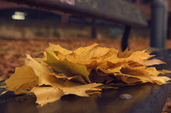 Autumn leaves. On the bench Royalty Free Stock Photography