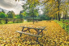 Autumn leaves on a bench in a park Stock Images