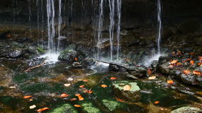 Autumn Leaves Beneath Oglebay Falls ögla stock video