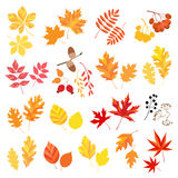 Autumn leaves and berries Royalty Free Stock Photos