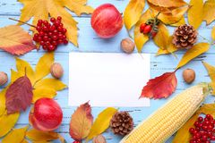 Autumn leaves with berries and vegetables on blue . Autumn composition with card royalty free stock image