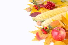 Autumn leaves with berries and vegetables isolated on a white stock photo