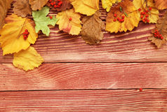 Autumn leaves and berry Stock Image