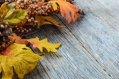 Autumn leaves and berry over wooden background Stock Images