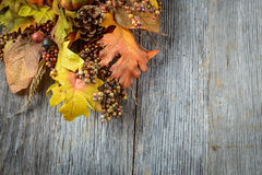 Autumn leaves and berry Royalty Free Stock Images