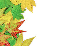 Autumn leaves and big green leaf isolated on white Stock Photography