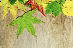 Autumn leaves and big green Leaf over wooden background Stock Photography