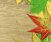 Autumn leaves and big green leaf over wooden background Stock Image
