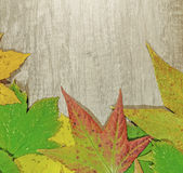 Autumn leaves and big green leaf over wooden background Stock Photos