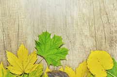 Autumn leaves and big green leaf over wooden background Royalty Free Stock Photo