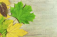 Autumn leaves and big green leaf over wooden background Royalty Free Stock Images