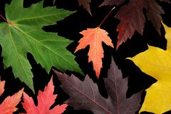 Autumn leaves on black Stock Photos