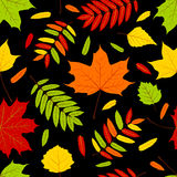 Autumn leaves on the black. Seamless pattern. Vector background Stock Photography