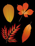 Autumn leaves on black background. Royalty Free Stock Image