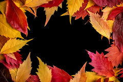 Autumn Leaves on Black Stock Photography