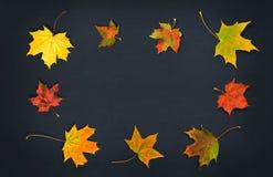 Autumn Leaves Bladeren van de dalings de kleurrijke esdoorn op donkere achtergrond Hoogste mening Stock Foto