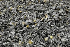 Autumn Leaves blanco y negro con los detalles amarillos Imagenes de archivo