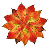 Autumn-Leaves-Blossom. Circle of colourful autumnal leaves arranged in a blossom's form stock image