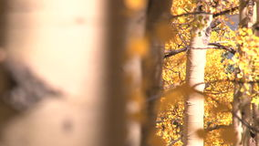 Autumn leaves blowing. Video of autumn leaves blowing stock video footage