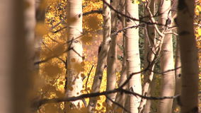 Autumn leaves blowing stock video footage