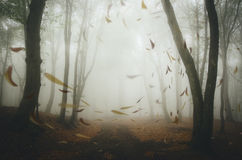 Autumn leaves blown by wind in forest Royalty Free Stock Photography