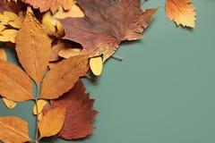 Autumn leaves. On blue background Stock Photo