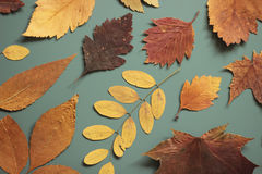 Autumn leaves. On blue background Stock Photography