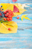 Autumn leaves on a blue background Stock Photo