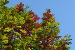 Autumn leaves on blue sky Stock Photo