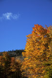 Autumn leaves on blue sky. Colorful leaves on a clear blue sky in autumn Stock Images