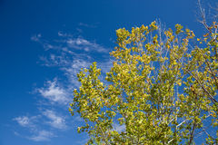 Autumn Leaves And Blue Sky Stock Images