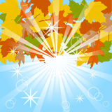 Autumn leaves on blue sky background. Stock Photos
