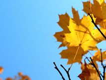 Autumn leaves on blue sky background. With copy space Royalty Free Stock Images
