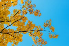 Autumn leaves with the blue sky Royalty Free Stock Image