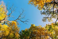 Autumn leaves with the blue sky Stock Photo