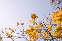 Autumn leaves with the blue sky Royalty Free Stock Photo