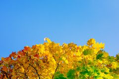 Autumn leaves with the blue sky Royalty Free Stock Photography