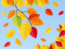 Autumn leaves on a blue sky background. Vector ill Royalty Free Stock Photo