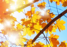 Autumn leaves and blue sky Stock Photography