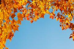 Autumn leaves on blue sky, border frame Royalty Free Stock Photo