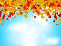 Autumn leaves on blue sky. EPS 8 Stock Photos